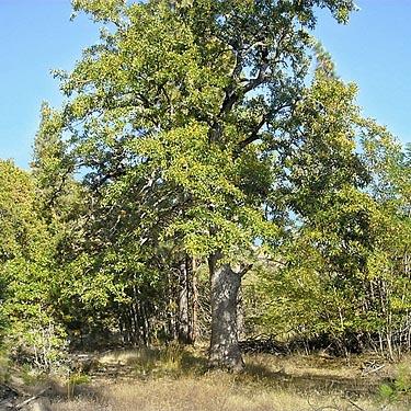 mighty oaks from little acorns grow essay writer